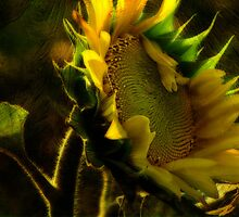Sunshine for Anne Gitto by vigor