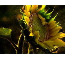 Sunshine for Anne Gitto Photographic Print
