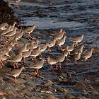 Flock of Redshank by Jon Lees