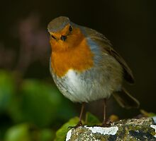 Mr Inquisitive by Mark Robson