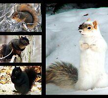 Squirrel Collage  by Marcia Rubin