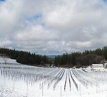 Snowy Vineyard by NancyC