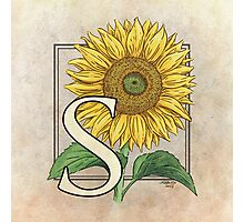 S is for Sunflower Photographic Print
