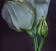 Lisianthus by Dianne English