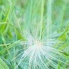 Wispy grass  by MIchelle Thompson