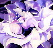 """""""Dancing Bugambilia"""" - purple bougainvillea blossoms by James  Knowles"""