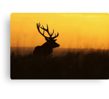 The Pride Of Nature Canvas Print
