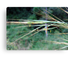 Our days are like grass Canvas Print