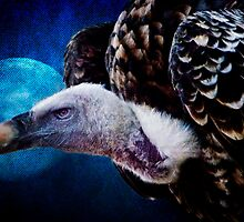A Vulture's Moon by Tarrby