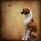 Beautiful Boxers, Bullies and Staffies