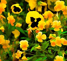 Pansies by Joy  Rector