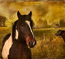 Rural Peace by hampshirelady