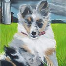 'Happy'  -A  Sheltie  Puppy by Jedro