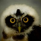 African Owl by Sue Ratcliffe