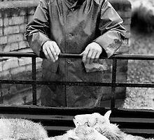 Tennant Farmer, Bala, North Wales by Tim Collier