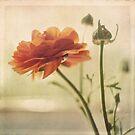 Vintage Bloom by Suzanne Cummings