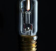 Bulb by Nigel Bangert