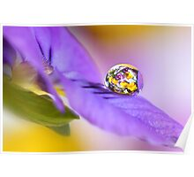 Pansy cluster Poster