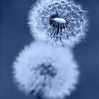 Dandelion Clocks in Blue by RedMann