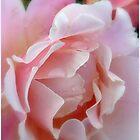 Rosé by HELUA