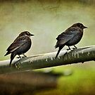 Rainy Day Birds by Laura Palazzolo