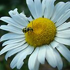 Daisy and Baby Lady Bug by BLemley