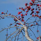Ruby Red Blossoms by Rosalie Scanlon