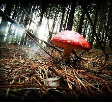 Mushroom by Regan Ferguson