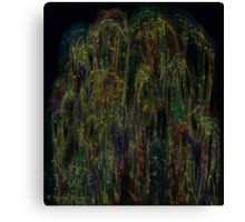 The beauty of the weeping willow Canvas Print