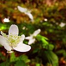 White flower by HeadOut