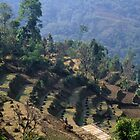 Farming in the Himalayan foot hills by Alex Cassels