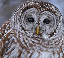 Evening Eyes  by Bill McMullen