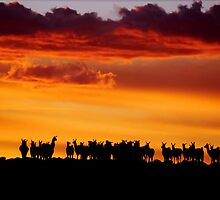 Sunset Llamas, Bolivia by Michael  Bollino