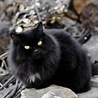 My Cat by TheOntology