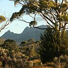 Cradle Mountain, Tasmania by paulinea
