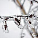 Frozen Catkin by Pietrina Elena