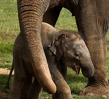 That really tickles Mum! by Mark Hughes