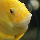 Bright yellow fish by Demelza Snell