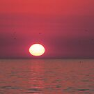 Pink florida sunset by jozi1