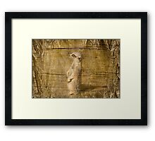 Sly Look Framed Print