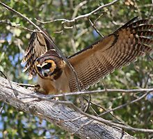 Asian Brown Wood Owl in a Tree by Paulette1021
