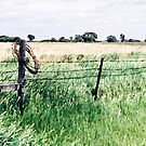 Barbwire in South Dakota by Glennis  Siverson