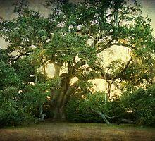 The Ruskin Oak by Jonicool
