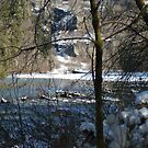 Hemple Creek Picnic Area in Winter by Edith Farrell