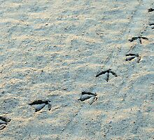 Bird Tracks in the Sand (Huntington Beach, California) by Brendon Perkins