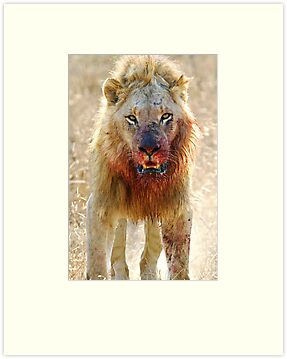 Majingilane - Male Lion - Hyena Intimidation by Michael  Moss