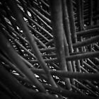 Sticks // 01 by Pholio