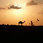 Camel silhouette by philrwesty