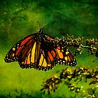 Butteryfly in the Mist by Trudy Wilkerson