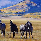 Horses in meadow near Jefferson, Colorado in fall by Klaus Girk